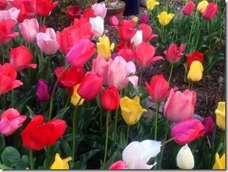 かもめ団地春の花々2018年 (2)