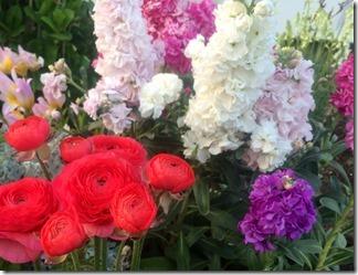 かもめ団地春の花々2018年 (5)