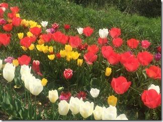 花々 (4)