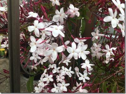 お花さん (3)