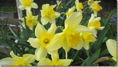 春の花 (9)