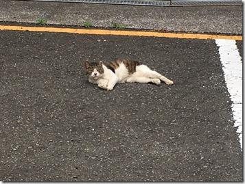 横須賀市は毅然たる姿勢で抗議を! 2度続いた米兵による交通事故 日米地位協定ゆえの闇 フェリー問題・明るい兆しが!